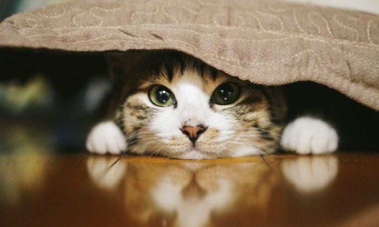手間要らずの猫