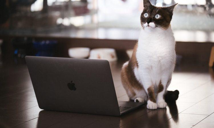 借金ブロガーの猫